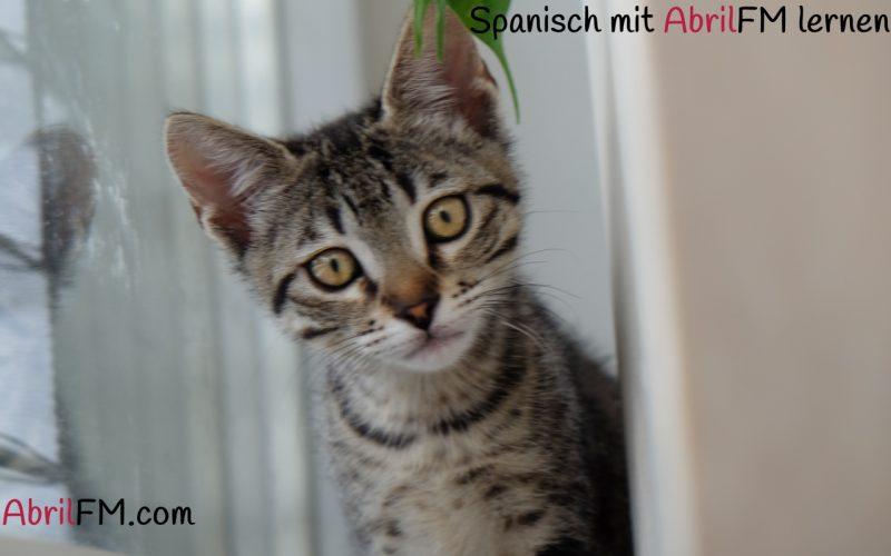 15. Die Katze- Spanisch mit AbrilFM lernen