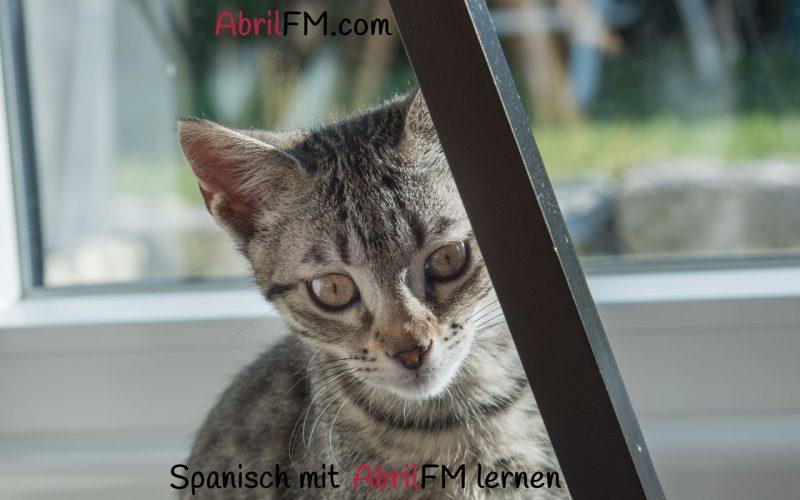 150. Die Katze- Spanisch mit AbrilFM lernen