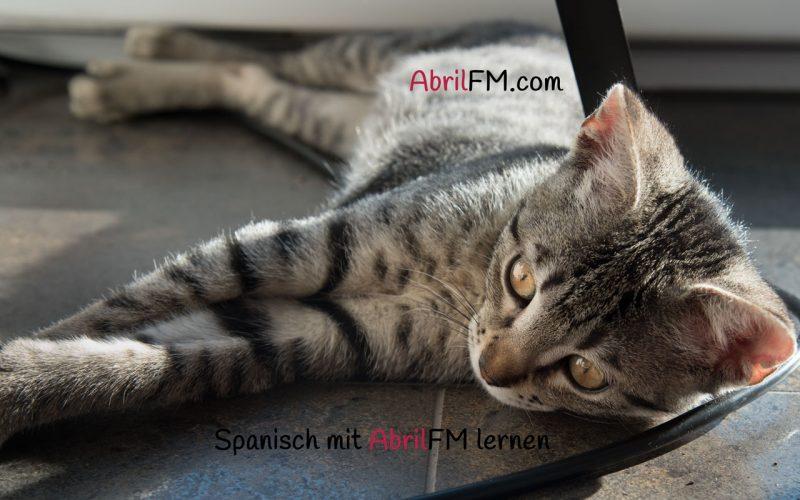 151. Die Katze- Spanisch mit AbrilFM lernen