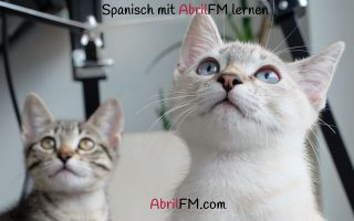 152. Die Katze- Spanisch mit AbrilFM lernen