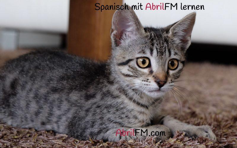 154. Die Katze- Spanisch mit AbrilFM lernen