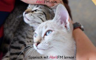155. Die Katze- Spanisch mit AbrilFM lernen