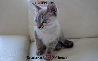 156. Die Katze- Spanisch mit AbrilFM lernen