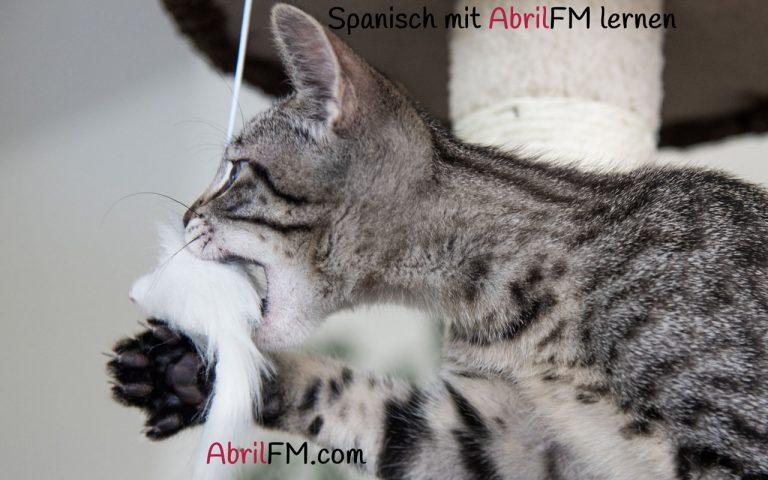 157. Die Katze- Spanisch mit AbrilFM lernen