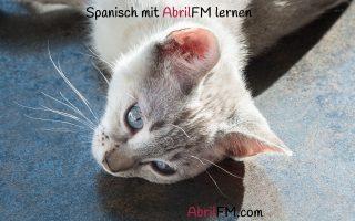 158. Die Katze- Spanisch mit AbrilFM lernen