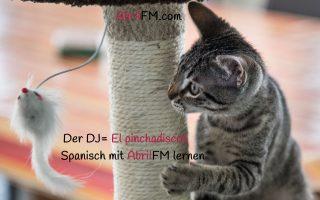 159. Die Katze- Spanisch mit AbrilFM lernen
