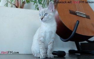 16. Die Katze- Spanisch mit AbrilFM lernen