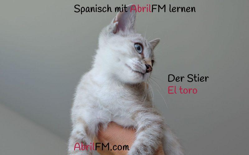 161. Die Katze- Spanisch mit AbrilFM lernen