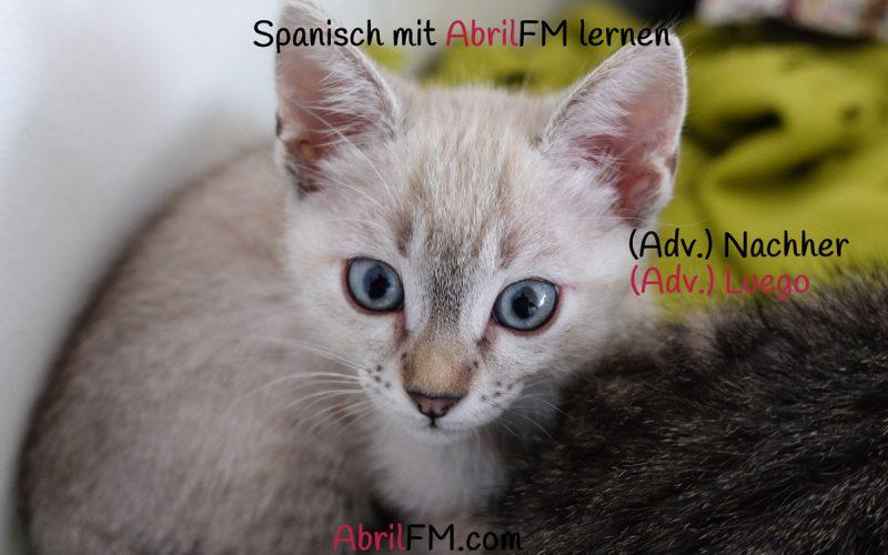 162. Die Katze- Spanisch mit AbrilFM lernen