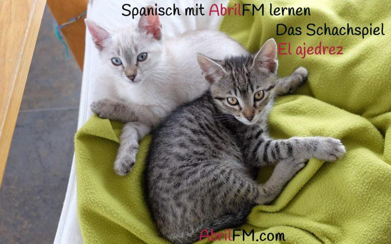 164. Die Katze- Spanisch mit AbrilFM lernen