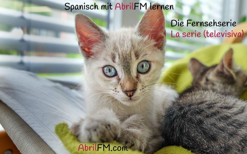 165. Die Katze- Spanisch mit AbrilFM lernen