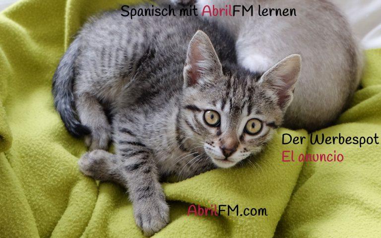 166. Die Katze- Spanisch mit AbrilFM lernen