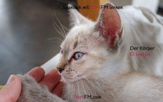 167. Die Katze- Spanisch mit AbrilFM lernen