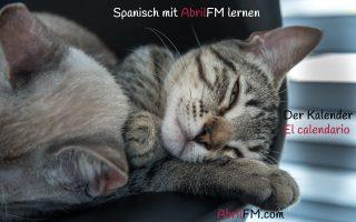 168. Die Katze- Spanisch mit AbrilFM lernen