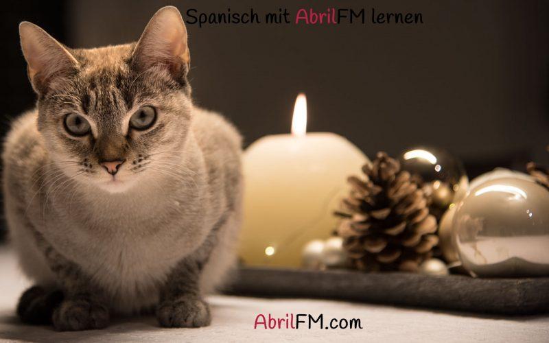 169. Die Katze- Spanisch mit AbrilFM lernen