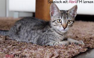 17. Die Katze- Spanisch mit AbrilFM lernen
