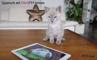 18. Die Katze- Spanisch mit AbrilFM lernen
