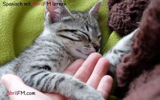 2. Die Katze- Spanisch mit AbrilFM lernen