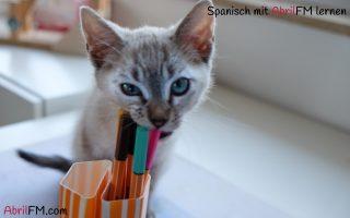 20. Die Katze- Spanisch mit AbrilFM lernen