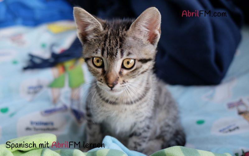 21. Die Katze- Spanisch mit AbrilFM lernen