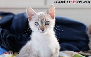 22. Die Katze- Spanisch mit AbrilFM lernen