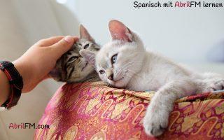 23. Die Katze- Spanisch mit AbrilFM lernen