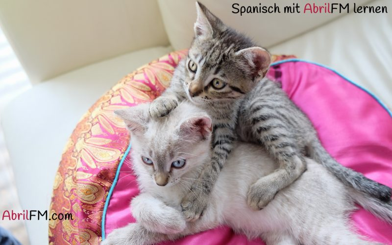 26. Die Katze- Spanisch mit AbrilFM lernen
