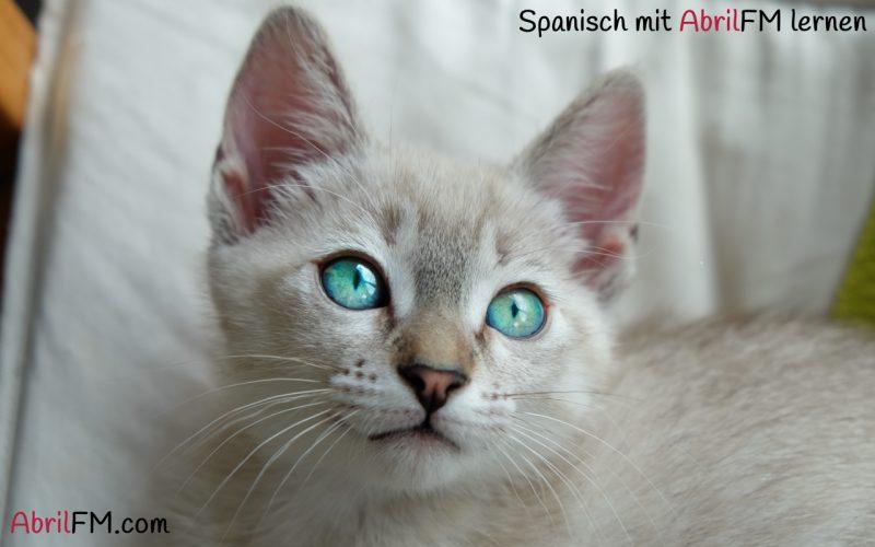 28. Katze. Spanisch mit AbrilFM lernen