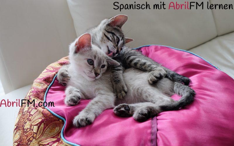 29. Die Katze- Spanisch mit AbrilFM lernen