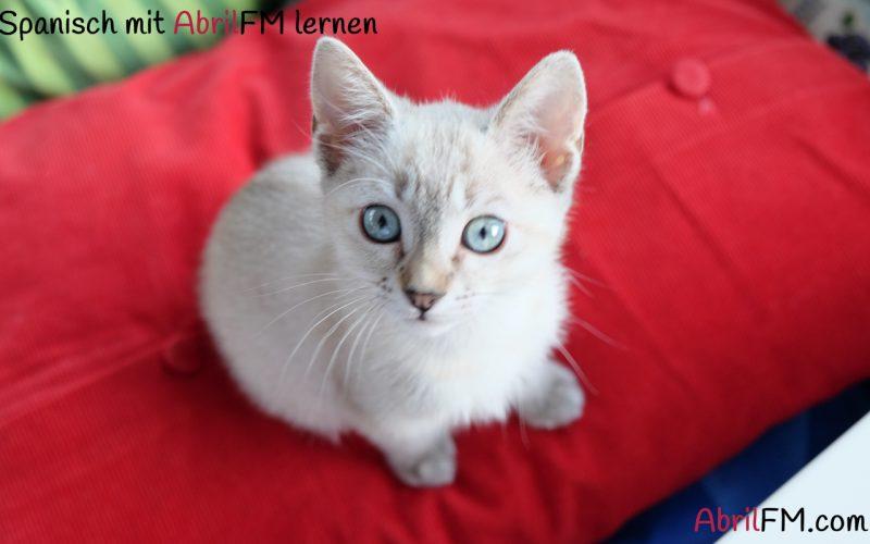 3. Die Katze- Spanisch mit AbrilFM lernen