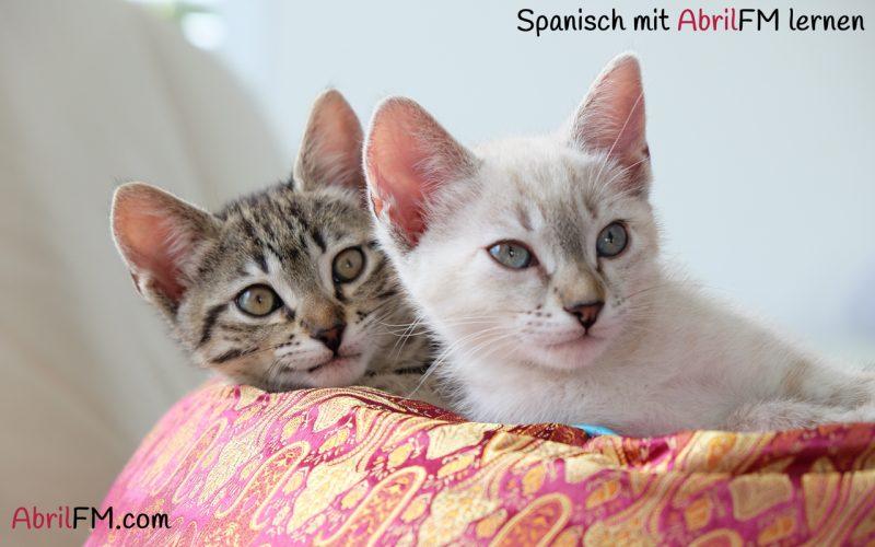 30. Die Katze- Spanisch mit AbrilFM lernen