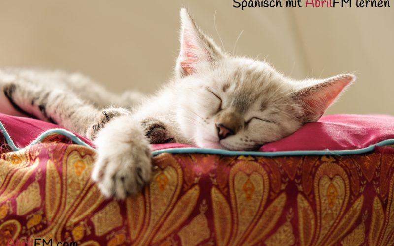 31. Die Katze- Spanisch mit AbrilFM lernen