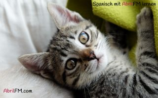 32. Die Katze- Spanisch mit AbrilFM lernen