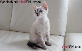 34. Die Katze- Spanisch mit AbrilFM lernen