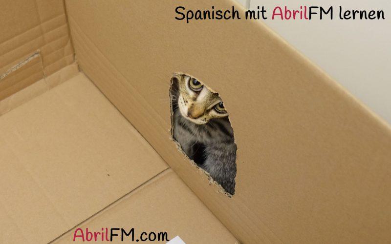 35. Die Katze- Spanisch mit AbrilFM lernen