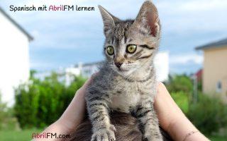 36. Die Katze- Spanisch mit AbrilFM lernen
