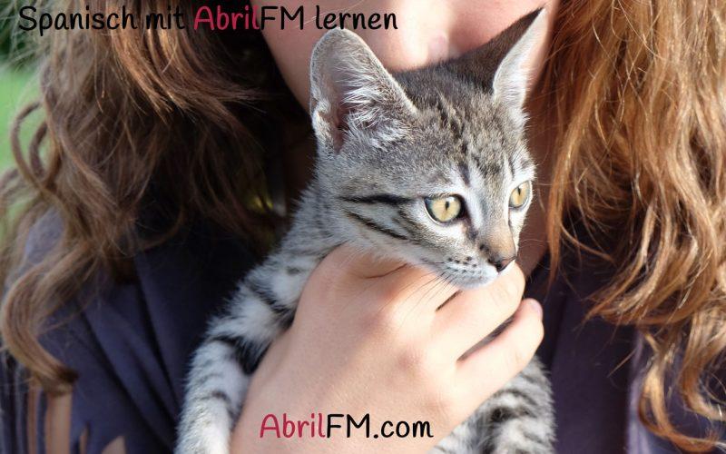 38. Die Katze- Spanisch mit AbrilFM lernen
