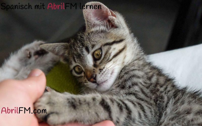 39. Die Katze- Spanisch mit AbrilFM lernen