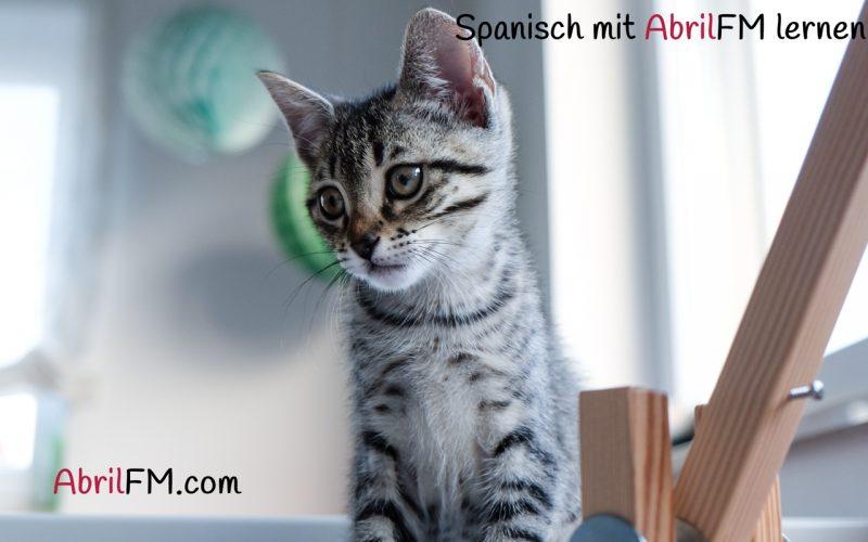 4. Die Katze- Spanisch mit AbrilFM lernen
