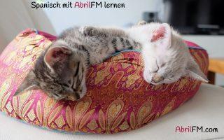 40. Die Katze- Spanisch mit AbrilFM lernen