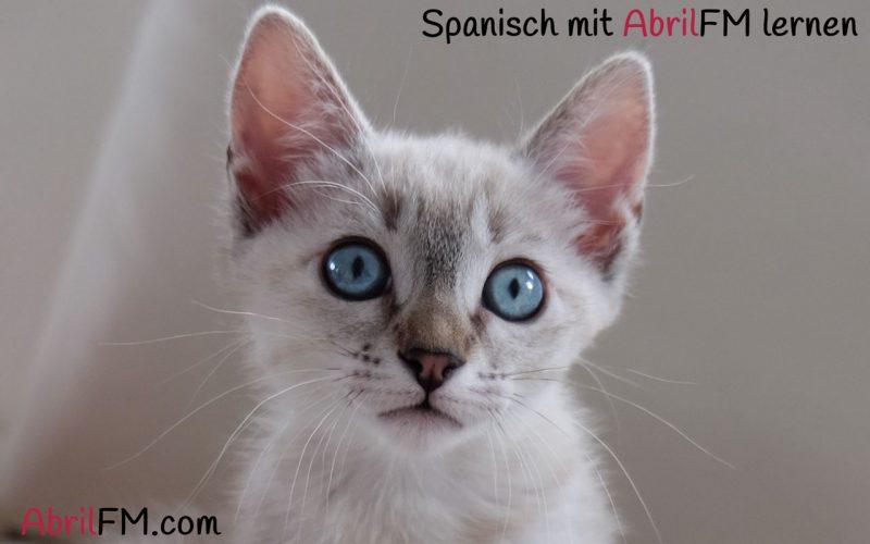 42. Die Katze- Spanisch mit AbrilFM lernen