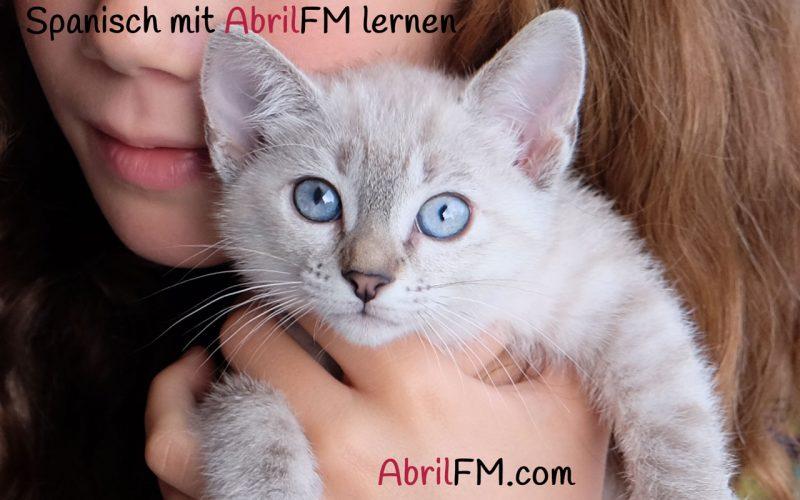 44. Die Katze- Spanisch mit AbrilFM lernen