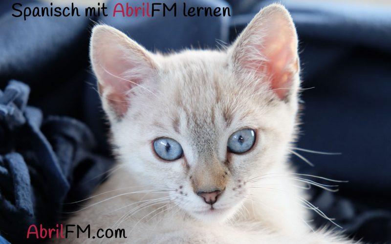 45. Die Katze- Spanisch mit AbrilFM lernen