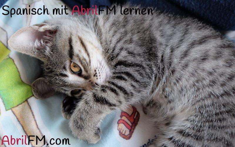 46. Die Katze- Spanisch mit AbrilFM lernen
