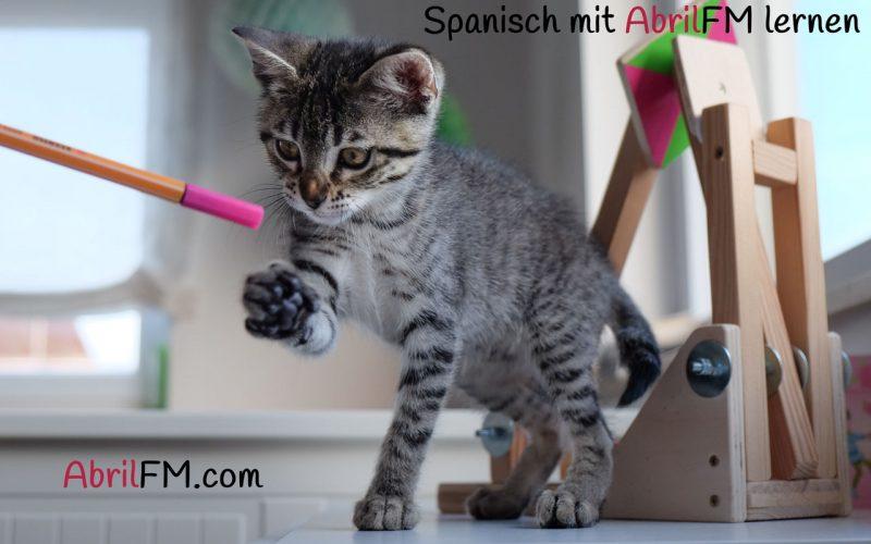 47. Die Katze- Spanisch mit AbrilFM lernen