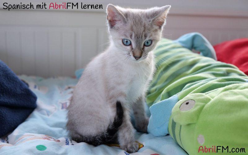 48. Die Katze- Spanisch mit AbrilFM lernen