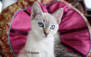 5. Die Katze- Spanisch mit AbrilFM lernen