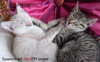 50. Die Katze- Spanisch mit AbrilFM lernen