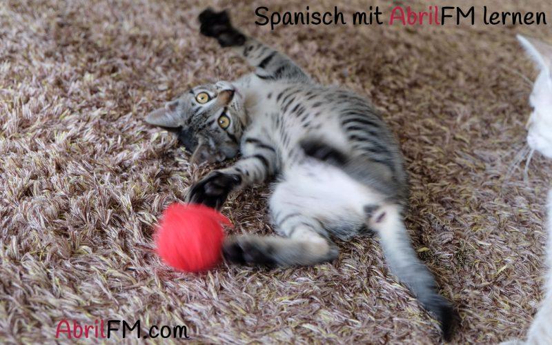 51. Die Katze- Spanisch mit AbrilFM lernen