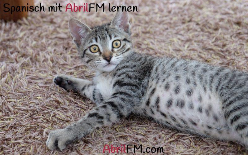52. Die Katze- Spanisch mit AbrilFM lernen
